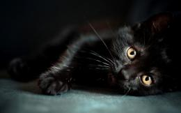 black cat wallpapers 10 black cat wallpapers funny cat funny 1830