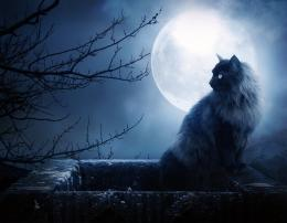 Black Cat HD Wallpapers | Black Cat Images | Cool Wallpapers 1595