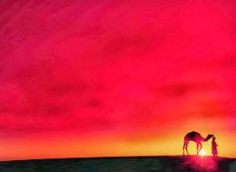 Camel animal hd wallpapers 1903