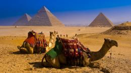Camel HD Desktop Wallpapers | Camel Pictures, Images | Cool Wallpapers 406