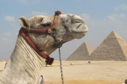 Camel 10 HD Wallpaper For Desktop 1290