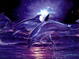 Digital Dolphins hd Wallpaper and make this wallpaper for your desktop 1643
