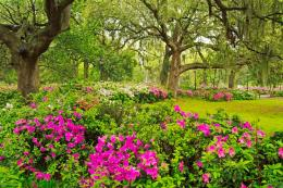 flower garden, flower forest cool wallpapers, wonderful flower garden 1584