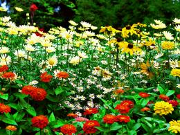 Flower Garden Wallpaper 872