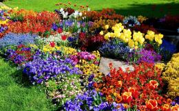 Flower Garden Wallpapers 1370