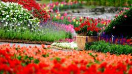 Amazing Flower Garden | 1600 x 900 | Download | Close 329