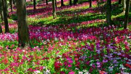flower garden garden flowers wallpaper flower garden flowers garden 1399