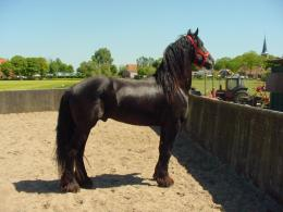 friesian black horse wallpaper friesian black horse wallpaper with boy 968