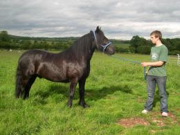 friesian brown running horse wallpaper friesian black horse wallpaper 151