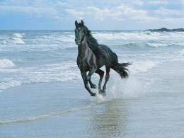 Friesian Horse Desktop Wallpaper | Friesian Horse Images | Cool 1836