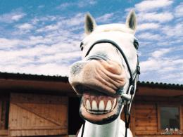 Funny Animals hd Wallpapers 2013 | All Funny 1235