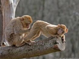 Funny Animals Wallpaper 9507 Hd Wallpapers 1387