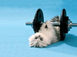 Funny Animals Wallpapers For Desktop 2011 | Funny World 1440