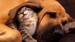 Funny Best Friend Animal Background HD Wallpaper Funny Best Friend 712