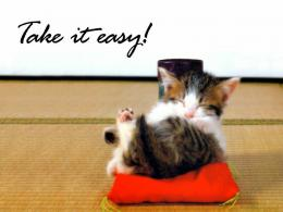 Tag: Funny Pets Wallpapers, Images, Photos, Pictures and Backgrounds 1199