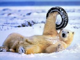 Funny Animals hd Wallpapers 2013 1397