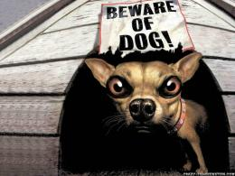 Funny Dog Wallpapers 7793 Hd Wallpapers 1287