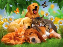 Funny animal wallpapers for computer 245