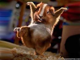 Funny Animal Wallpapers | Top HD Wallpapers 1090