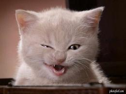 Wallpapers He Wallpapers: Funny animals wallpapers 518