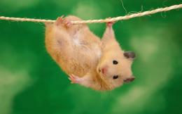 Funny Animal Backgrounds, wallpaper, Funny Animal Backgrounds hd 376