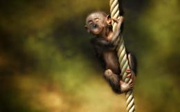 Monkey HD Wallpapers | Monkey Pictures Free | Cool Wallpapers 1807