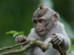 Nature wallpaper: Baby Monkey Wallpapers, Monkey Baby Funny Wallpapers 1009
