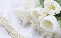 White Fowers HD Wallpapers   White Flowers Images   Cool Wallpapers 1715