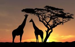 HD giraffes wallpaper with giraffes at sundown | HD giraffe wallpapers 410
