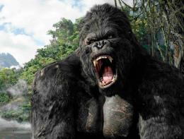 Gorilla Pictures HD Wallpaper 19 1287