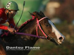 horse racing pictures horse racing pictures horse racing pictures 1416