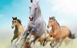 Animal Scraps » Racing Horse Hd Wallpaper 920