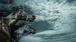 Desktop Wallpaper,Animals,Horse,Black,horses,HD Wallpapers,Widescreen 1672