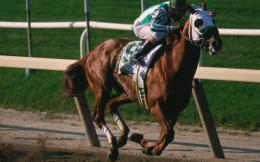 Horse Racing HD Wallpapers 1025