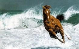 thoroughbred horse running on water download free hd wallpapers of 396