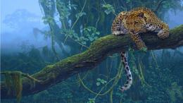 Jaguar Animal Night HD Wallpaper 674