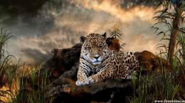 big cat jaguar wallpapers hd jaguar wallpaper for desktop 584