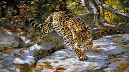 The jaguar spotted cat wold big animals HD Wallpaper 426
