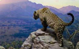 Jaguar Animal HD Wallpapers | Jaguar Animal Pictures | Cool Wallpapers 1138