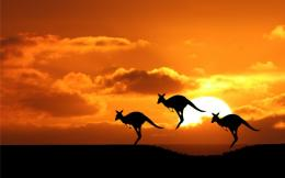 Kangaroo Sunset Animals Iphone Ipad HD Wallpaper 747
