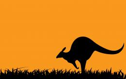Kangaroo in Sunset HD Wallpapers 1474