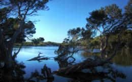 Widescreen Landscape Nature Lagoon Kangaroo HD Wallpaper 1181