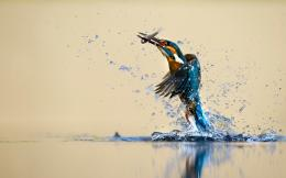 new hd wallpaper kingfisher hunting fish awesome hd new wallpaper 1037