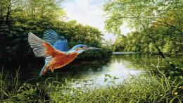 Kingfisher painting trees art river bird HD Wallpaper 1156