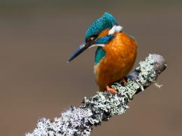 Kingfisher birds HD wallpapers 895