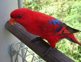 red parrot bird hd wallpaper 221