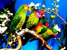 Birds flower nature green colors small flat:High Contrast 587