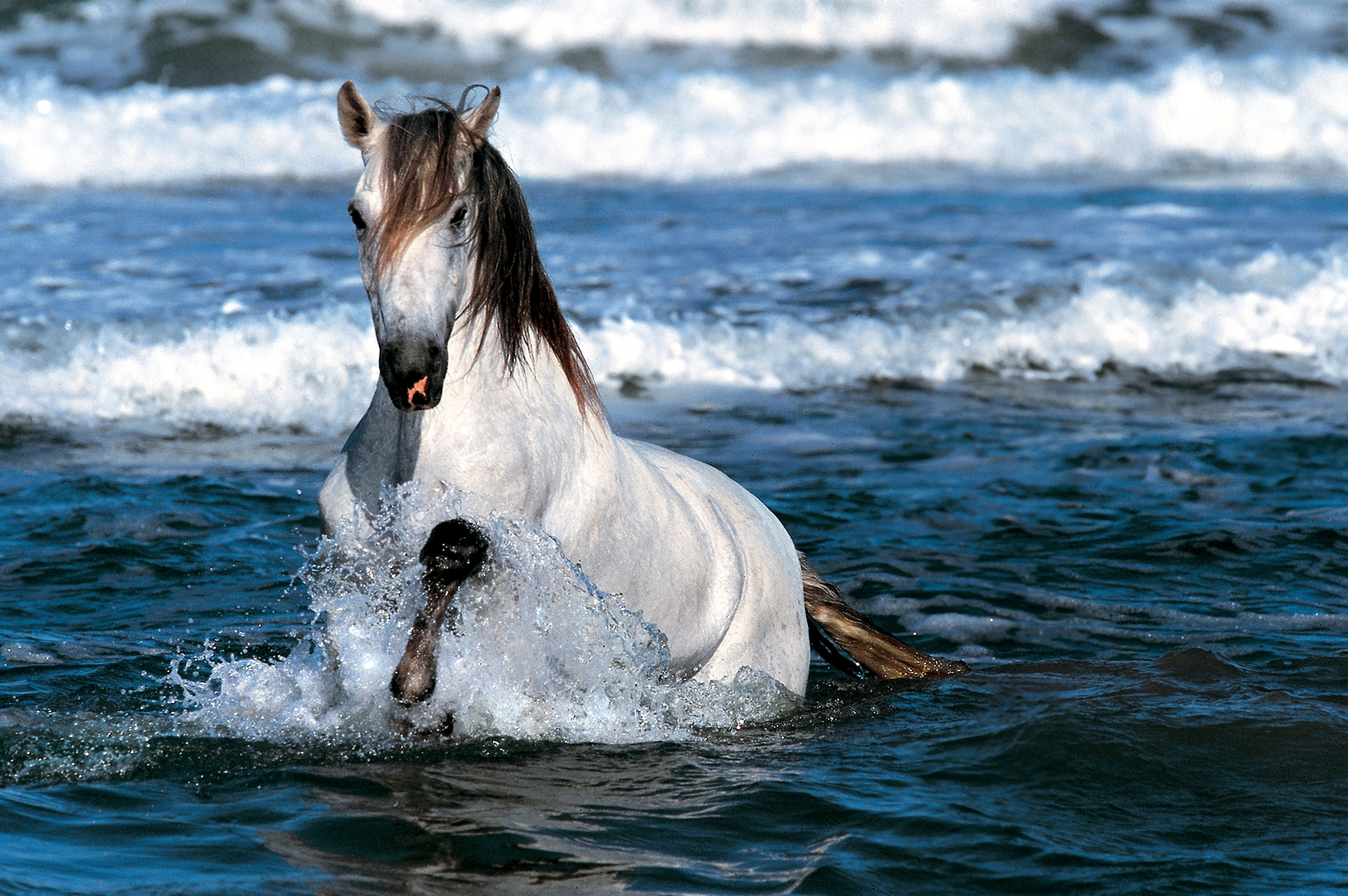 Lusitano Horse Wallpapers 1400