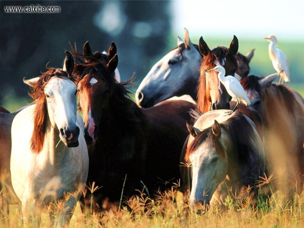 Animals: Horse Youngstock Lusitano, picture nr10815 1205