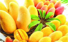 Health Benefits of the Mango 365